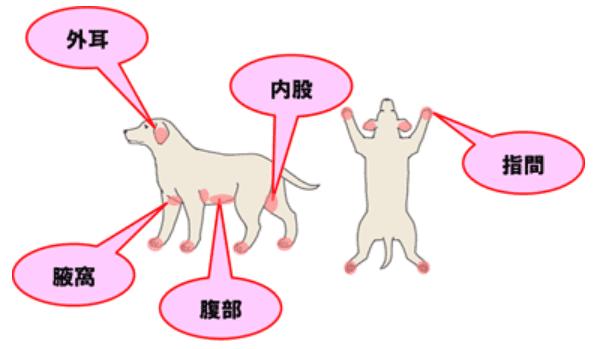 犬アトピー性皮膚炎の炎症が出やすい場所