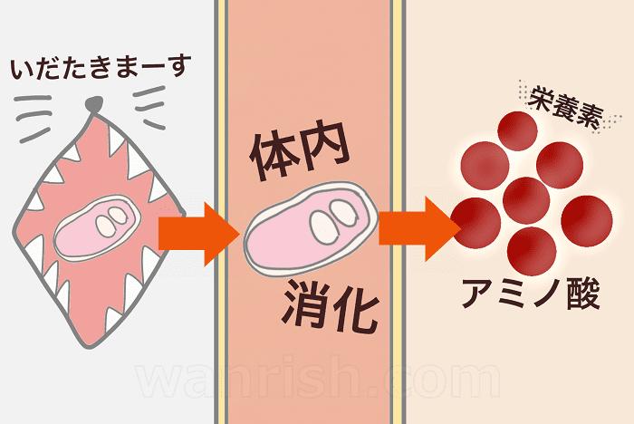 原材料が体内で栄養素に分解されるイメージ