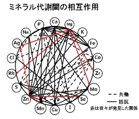ミネラルの相互作用